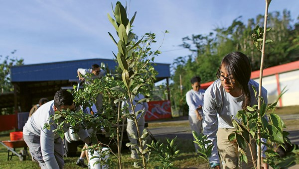 Guests at several Puerto Rico resorts can volunteer with Para La Naturaleza to plant native trees that are resistant to hurricanes and drought.
