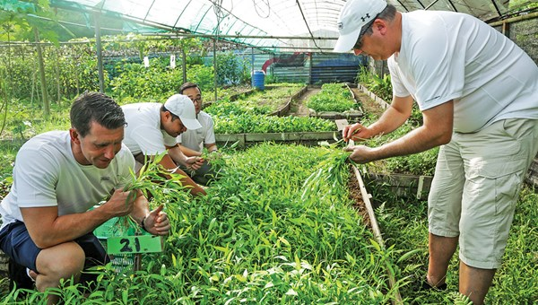 A Hilton team works with the Ground Up Initiative to plant and harvest produce that will be donated to Singapore's largest soup kitchen.