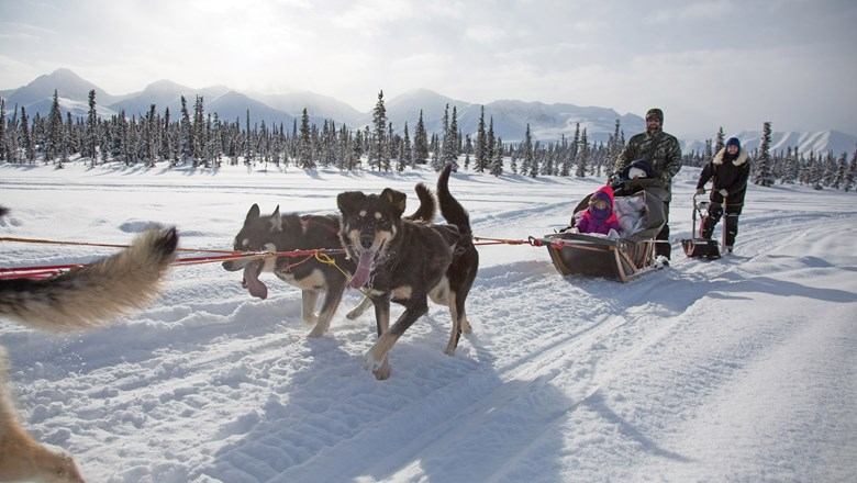 Traverse Alaska's Intimate Iditarod Experience offers a behind-the-scenes look at the annual dog sled race.