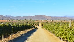 Dream hotel coming to Baja California wine country