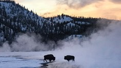 Tauck's 'culturious' adventure in Yellowstone offers up exceptional experiences