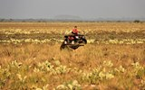 Judah Kenyon of Saddle Mountain Ranch, keeps his ATV downwind of a giant anteater crossing the savannah.