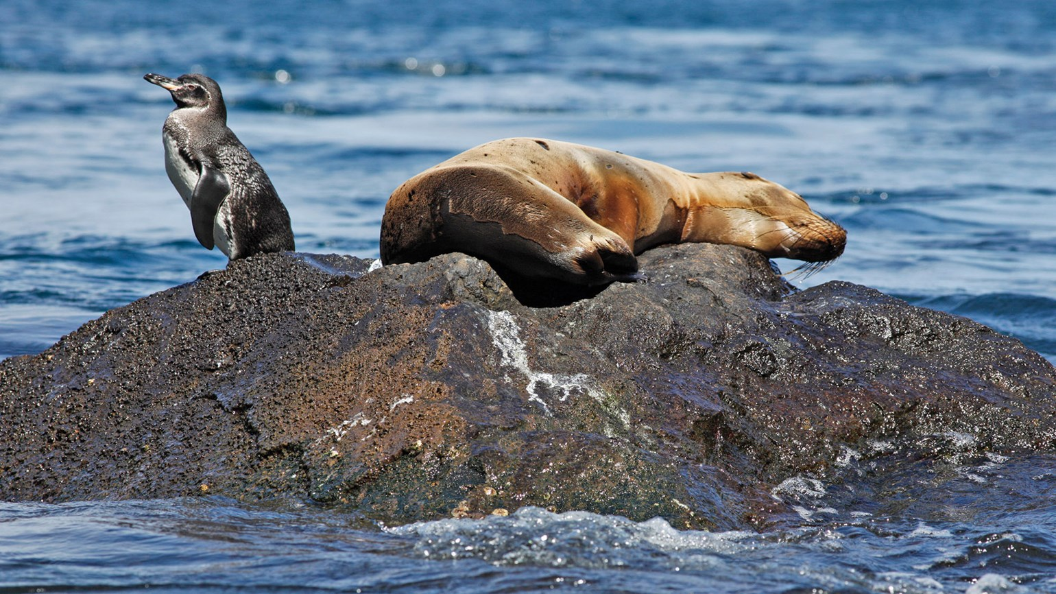 Galapagos encounters on Quasar Expeditions cruise