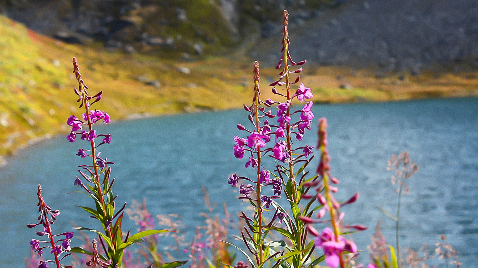 Salmon Berry takes over at storied Hatcher Pass site