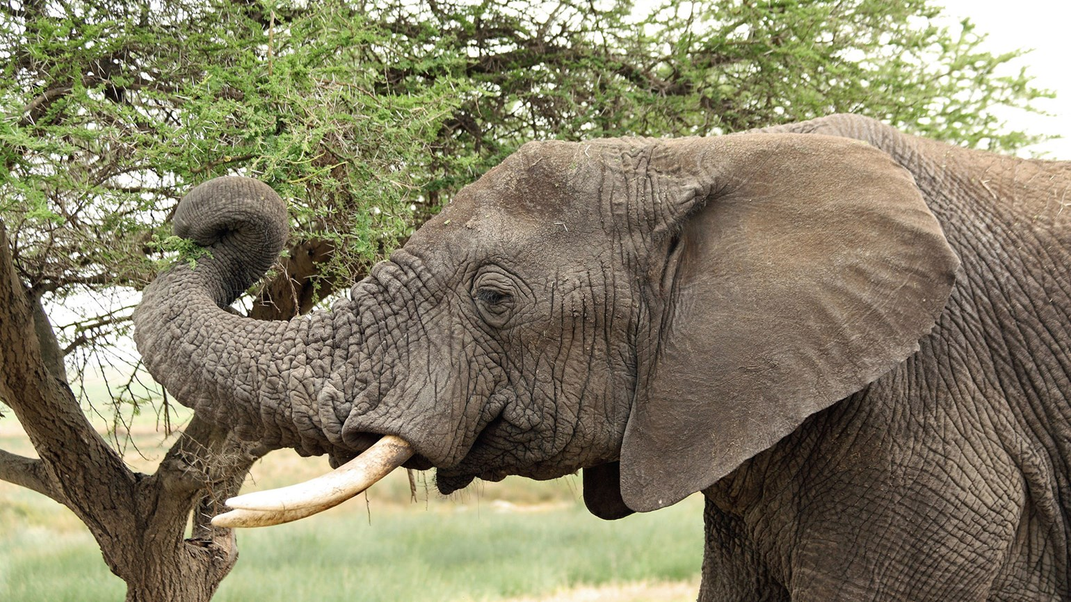 Tour operator doing its part to aid conservation effort in Botswana