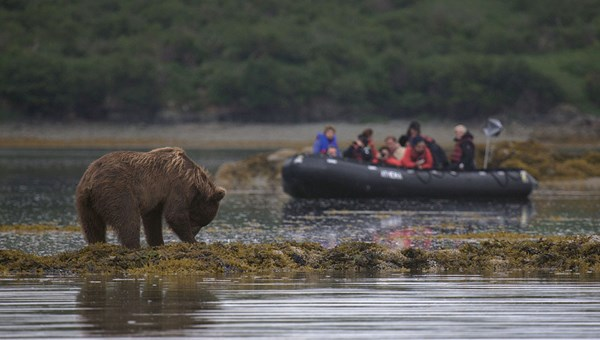 Bear-watching on an Abercrombie & Kent trip in the Bering Sea.