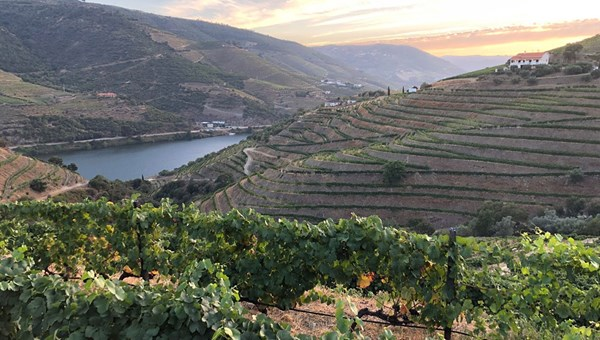 Sunset at Quinta Nova in the Douro Valley.
