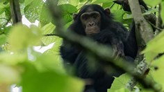 Ecotourism taking root at Rwandan national park