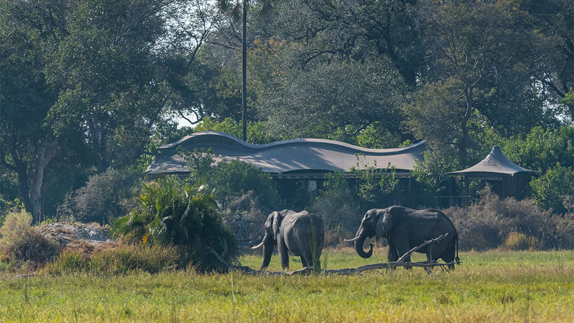 Elephants spotted near the lodge.