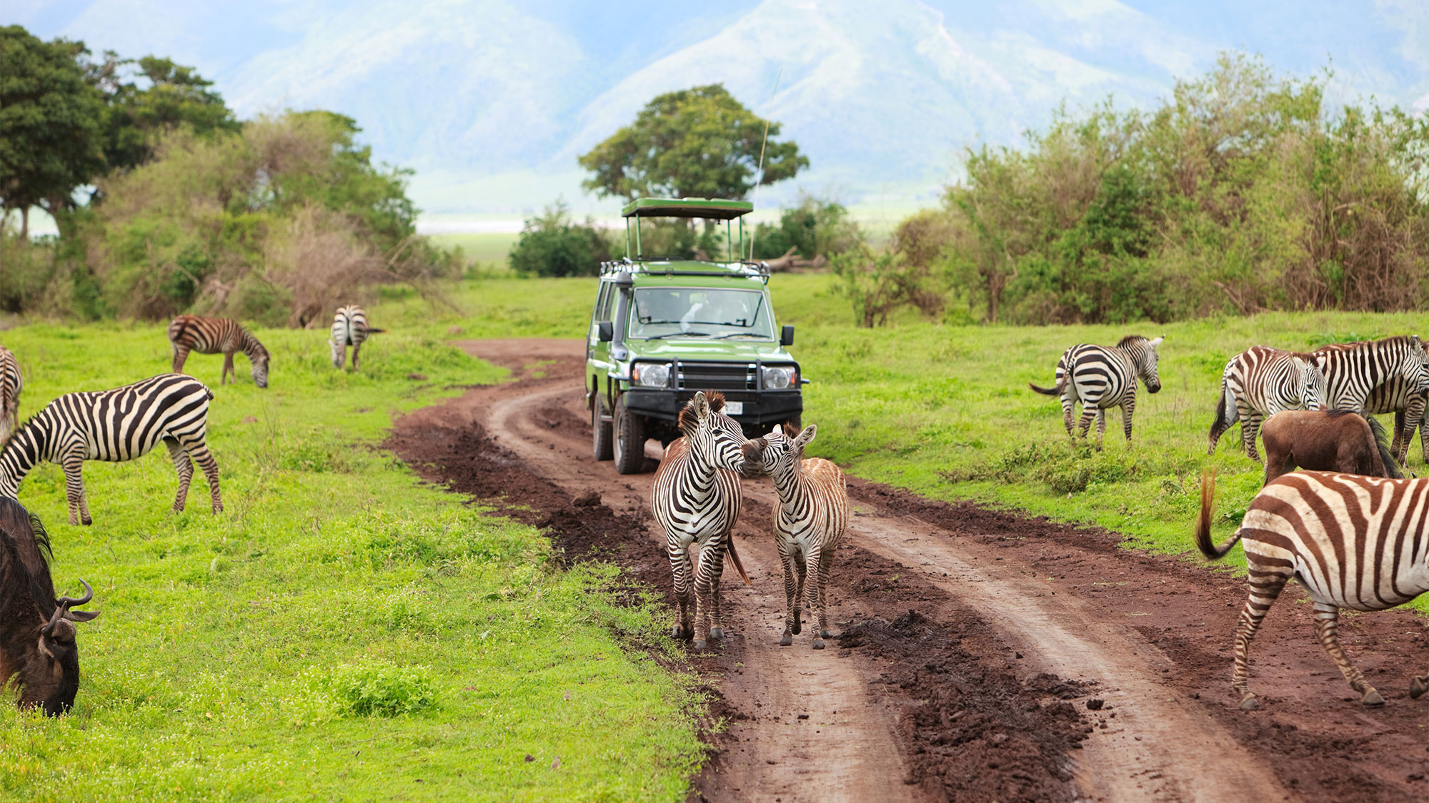 New Tourism Tax Roils Tanzania Safari Industry Travel Weekly