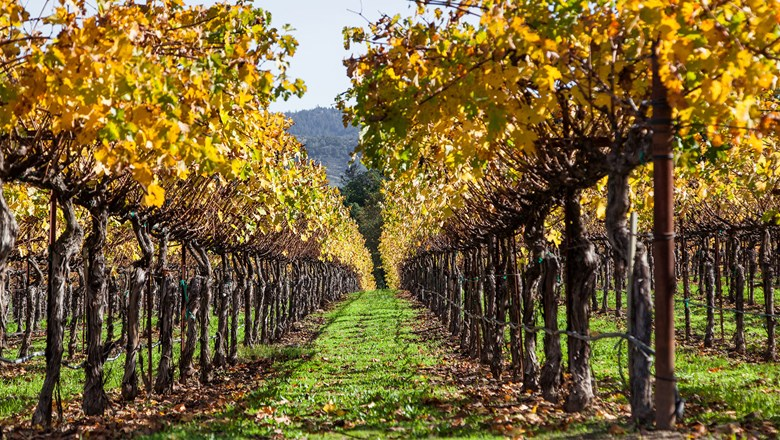 "Napa Valley is one of the destinations offered in Pleasant Holidays' ""Explore America Getaways Sale."""