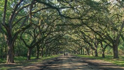 Wormsloe Oak Plantation, Savannah Ga