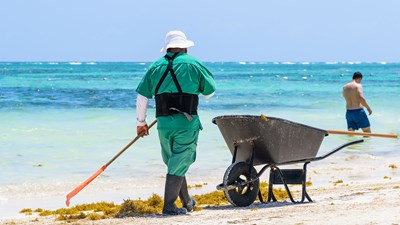 What to do with that stinky sargassum?
