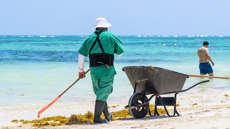 What to do with that stinky sargassum?: Travel Weekly