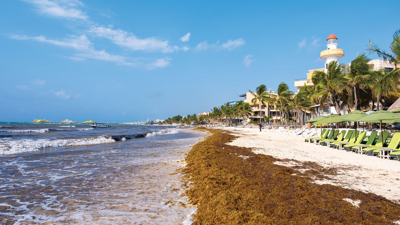 Mexican Resorts Get Creative To Deal With Sargassum Travel Weekly