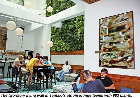 The two-story living wall in the atrium at Tantalo in Panama City teems with 983 plants.