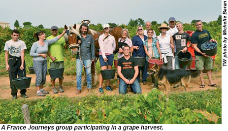 A France Journeys group participating in a grape harvest.