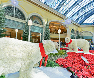 Bellagio-ConservatoryBotanicalGardens-Holidays300