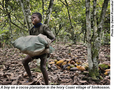 A boy on a cocoa plantation in an Ivory Coast village.