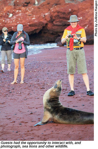 Interacting with sea lions