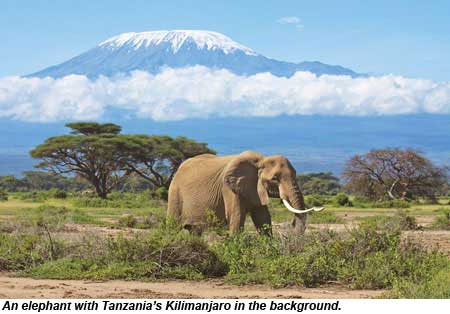 An elephant with Kilimanjaro in Tanzania in the background.