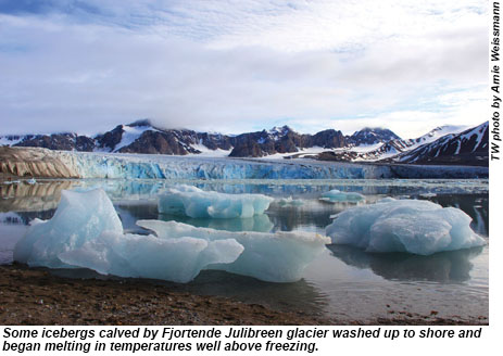 Some icebergs calved by Fjortende Julibreen glacier washed up to shore and began melting in temperatures well above freezing.
