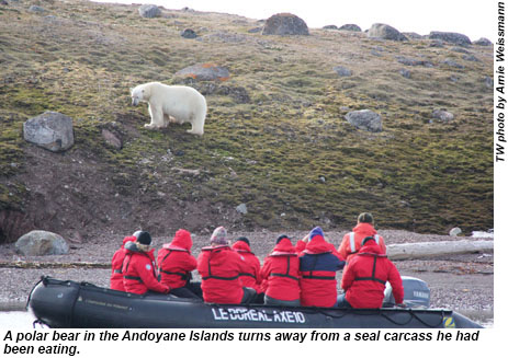 Arctic animals are constantly on the hunt for food. A polar bear in the Andoyane Islands turns away from a seal carcass he had been eating.