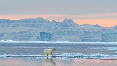 PolarBear-Greenland410
