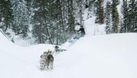 Triple Creek Dog Sledding