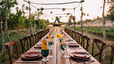 Los Cabos NEW Farm to Table