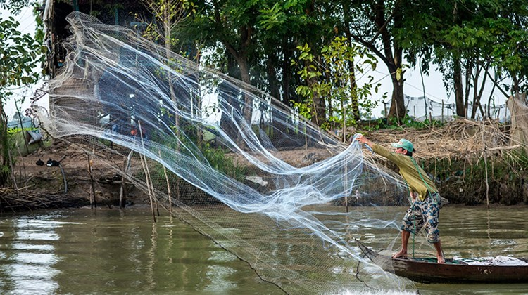 A fisherman casts his net in Chau Doc.