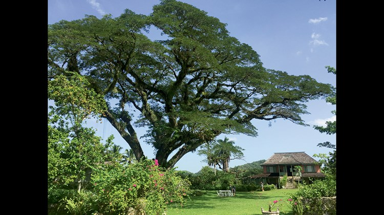 Meals at Pantrepant are eaten under this giant tree behind Chris Blackwell's home.