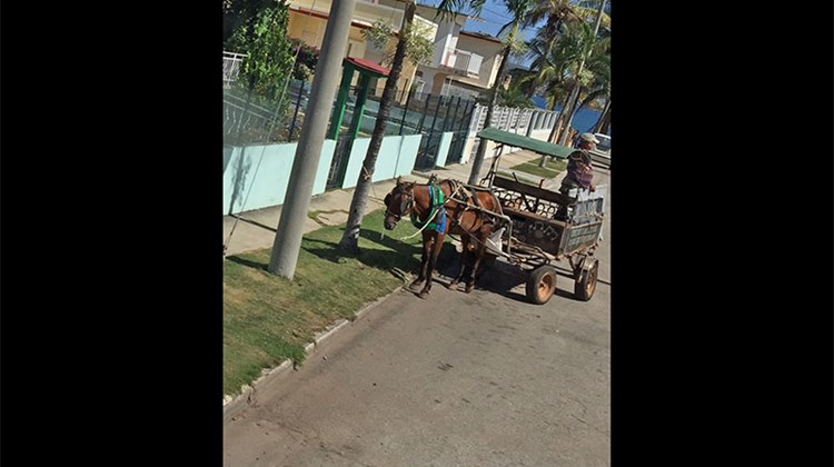 Horse-drawn carts are a popular form of transportation in the village of Cardenas near Varadero, Cuba.