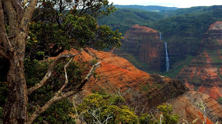 Some of the best views of Waipoo Falls can be enjoyed from the other side of the canyon, however, at lookouts along Waimea Canyon Drive.