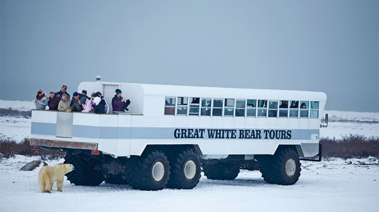 A Great White Bear Tours Polar Rover.