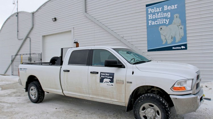 Bears that wander into town are taken to the Polar Bear Holding Facility, a former military hangar.