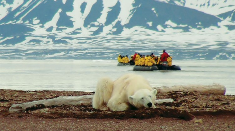 A sighting during a Quark Expeditions trip.