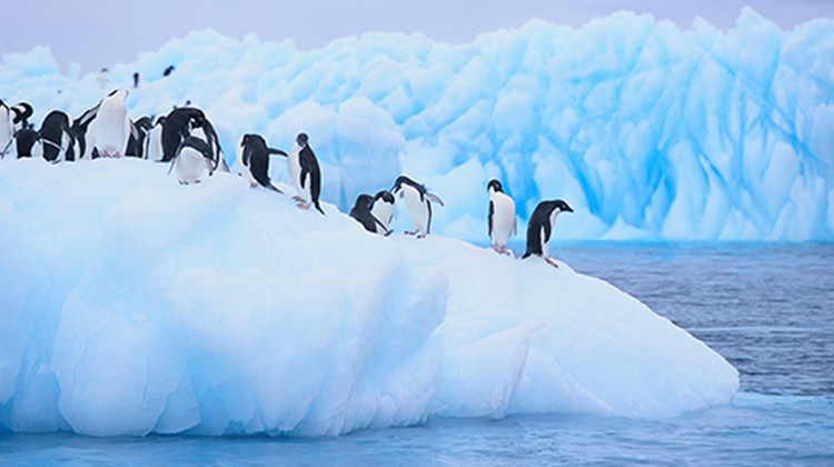Roger Block, Travel Leaders Franchise Group, hopes to someday be one of the more than 37,000 annual visitors to Antarctica, his top bucket list choice.
