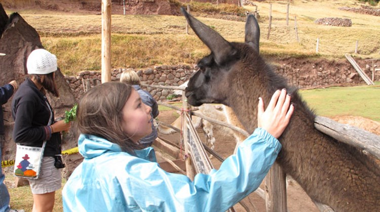 Friendly llamas: Gavriela pets a friendly llama
