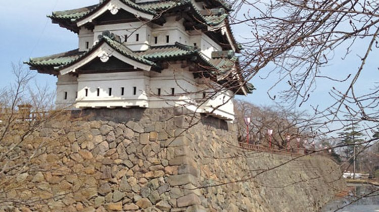 A cherry tree about to blossom in front of the castle tower in Hirosaki's Castle Park, host to the nation's largest cherry blossom festival.