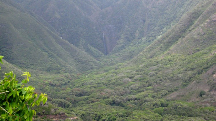 Visitors can join guided hikes into Halawa Valley that travel to the distant waterfall visible in this image. Hawaiian stories, lessons about plants and animals and a chance to swim in the waterfall's pool are all part of the trip.