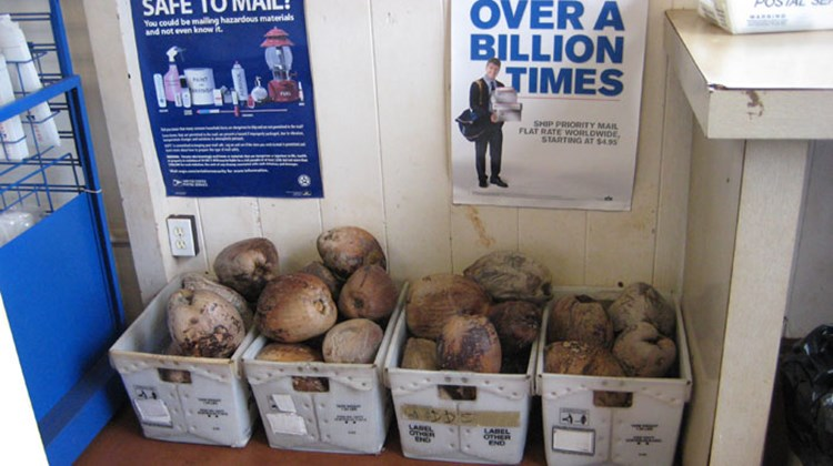 Molokai visitors looking to mail home a unique gift may want to stop by the post office in Hoolehua, where customers can buy a coconut, address it, and ship it--sans any box or packaging -- all in one stop.
