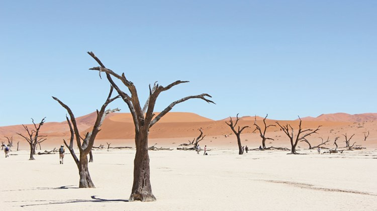 Thousand-year-old dead camel-thorn acacia trees anchored in Deadvlei, a desert salt pan in Namibia's Namib-Naukluft Park, the largest conservation area in Africa.