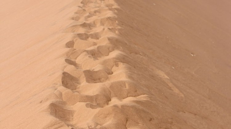 "The well-trod ""trail"" up the spine of Big Daddy dune."