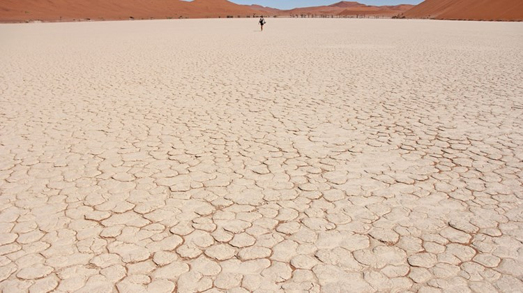 The dry, cracked earth of the Deadvlei salt pan.