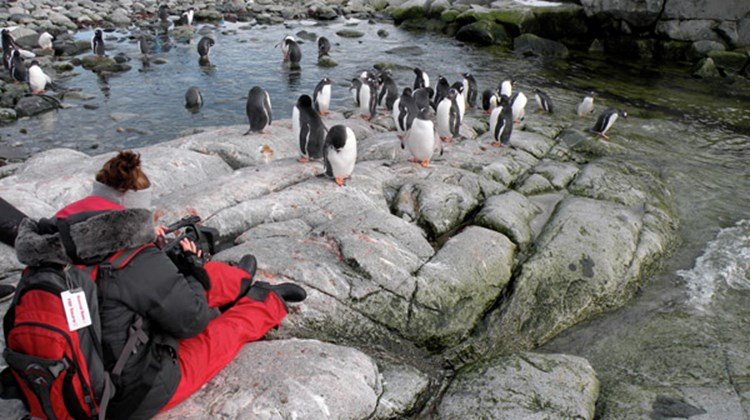 A passenger on the Fram photographing Penguins on Peterman Island.