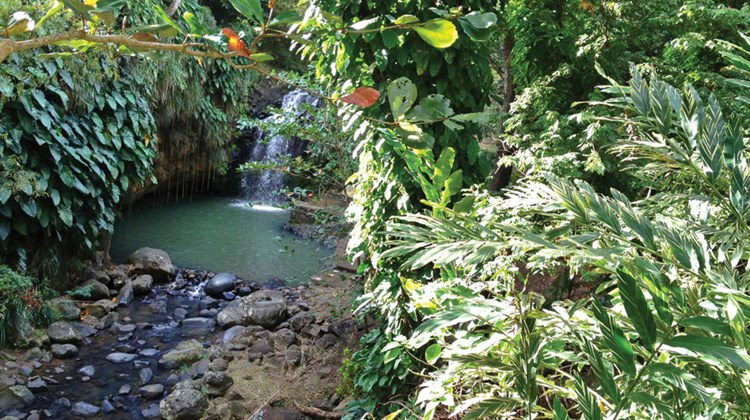 When venturing off-property, Annandale Waterfalls is a favorite spot on the island for a quick dip after a hike through the rainforest.