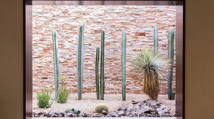 The Ritz-Carlton, Rancho Mirage's indoor cactus garden near the property's lobby reflects a more informal, local design approach to the Marriott International-managed hotel.