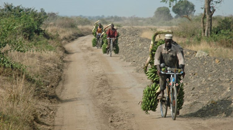 A dusty road in Queen Elizabeth National Park serves as a supply route for transporting plantains.