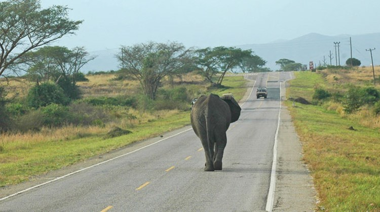 An elephant stays in his lane on a road near Queen Elizabeth National Park.